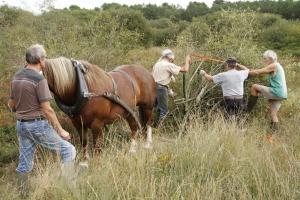 Tourbière de Sérent : débardage à cheval de saules